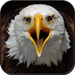 Eagle Wallpaper HD