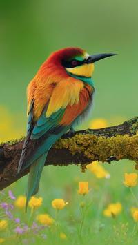 HD Bird Wallpapers poster