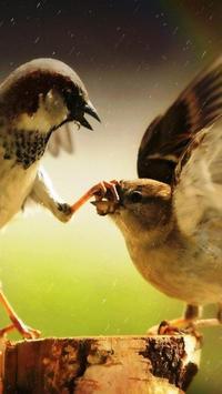 HD Bird Wallpapers apk screenshot