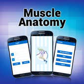 Muscle Anatomy icon