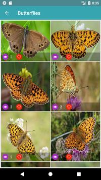 Nature Wallpapers: Birds, Animals, Butterflies screenshot 3