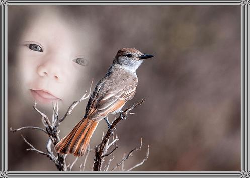 Bird Photo Frame poster