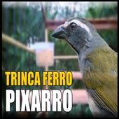 Canto Trinca Ferro Pixarro HD icon