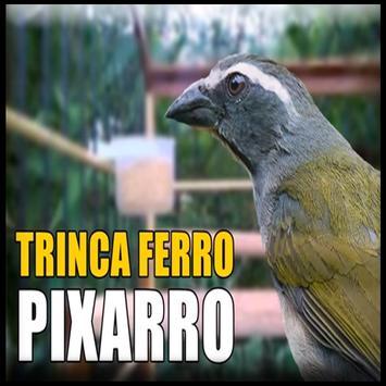 Canto Trinca Ferro Pixarro HD poster