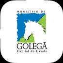 Município de Golegã aplikacja