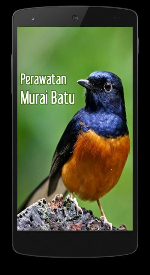Perawatan Burung Murai Batu For Android Apk Download