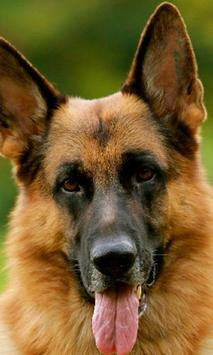 German Shepherds Dogs Jigsaw Puzzle poster