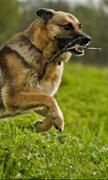 German Shepherds Dogs Jigsaw Puzzle apk screenshot