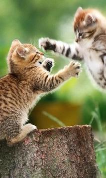 Kittens Cute Funny Best Jigsaw Puzzles apk screenshot