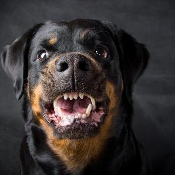 Rottweilers Dogs Funs Jigsaw Puzzle apk screenshot