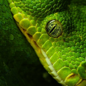 Snake Best Jigsaw Puzzles icon