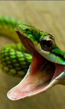 Snake Best Jigsaw Puzzles apk screenshot