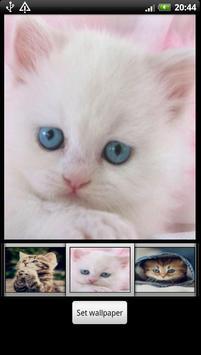 Cute Kitten HD Wallpaper screenshot 3