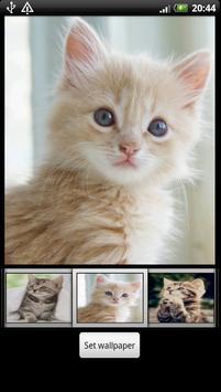 Cute Kitten HD Wallpaper poster