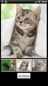 Cute Kitten HD Wallpaper screenshot 1