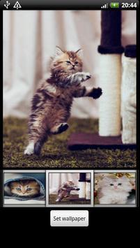Cute Kitten HD Wallpaper screenshot 2