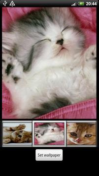 Cute Kitten HD Wallpaper screenshot 4
