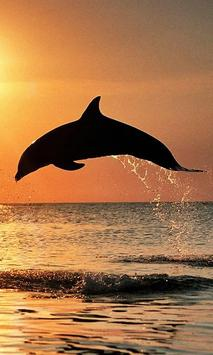Dolphin Jumps screenshot 1