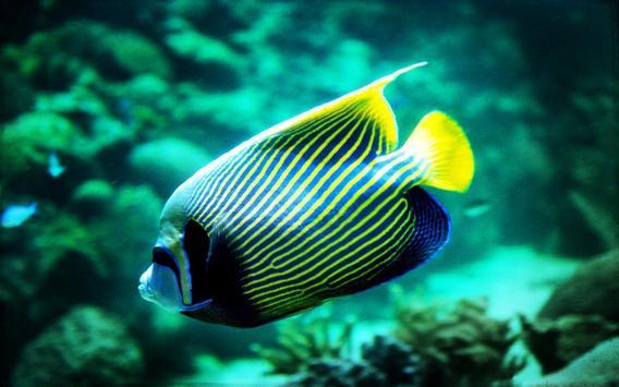 Fishes Sea Tropical live wallpaper apk screenshot
