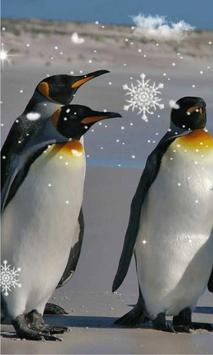 Pinguin live wallpaper poster