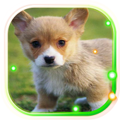 Puppies Pet Cute icon