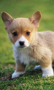 Puppies Pet Cute poster