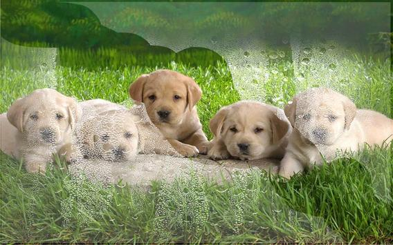 Puppies Pet Cute apk screenshot