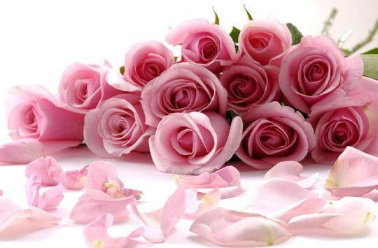 Roses Gallery live wallpaper screenshot 5