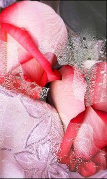 Roses Gallery live wallpaper screenshot 1