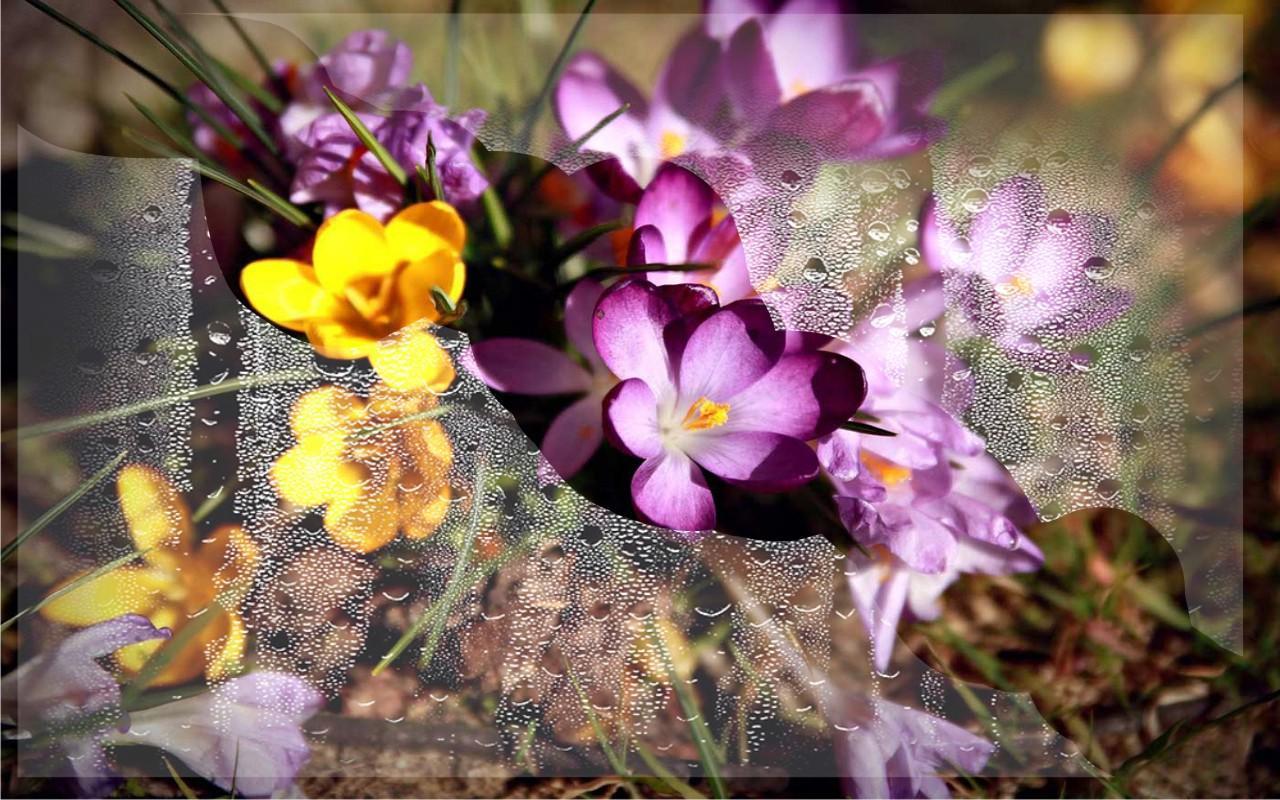 Springs flowers lwp apk apkpure springs flowers lwp apk mightylinksfo