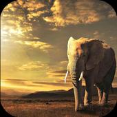 Elephant HD Wallpaper icon