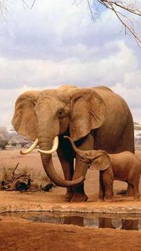 Elephant HD Wallpaper screenshot 5