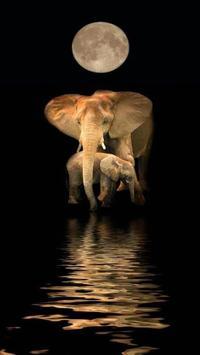 Elephant HD Wallpaper poster