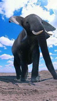 Elephant HD Wallpaper screenshot 1