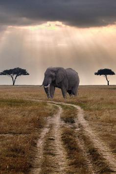 Elephant HD Wallpaper screenshot 2