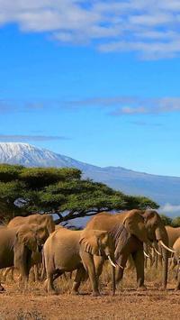 Elephant HD Wallpaper screenshot 3