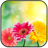 New Flowers Wallpapers 2017 icon