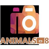 HD Duvar Kağıdı (Animals-8) icon
