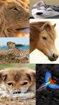 HD Duvar Kağıdı (Animals-7) poster