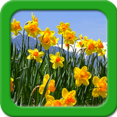 Narcissus Live Wallpapers icon