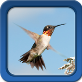Hummingbirds Live Wallpapers icon