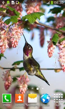 Hummingbirds Live Wallpapers screenshot 5