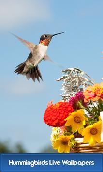Hummingbirds Live Wallpapers poster