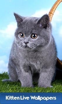 Kitten Live Wallpapers poster