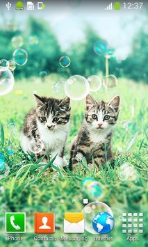 Kitten Live Wallpapers apk screenshot