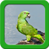 Parrot Live Wallpapers icon