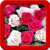 Rose Live Wallpapers icon