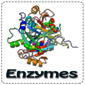 Enzymes icon
