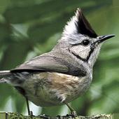 臺灣鳥類 圖標