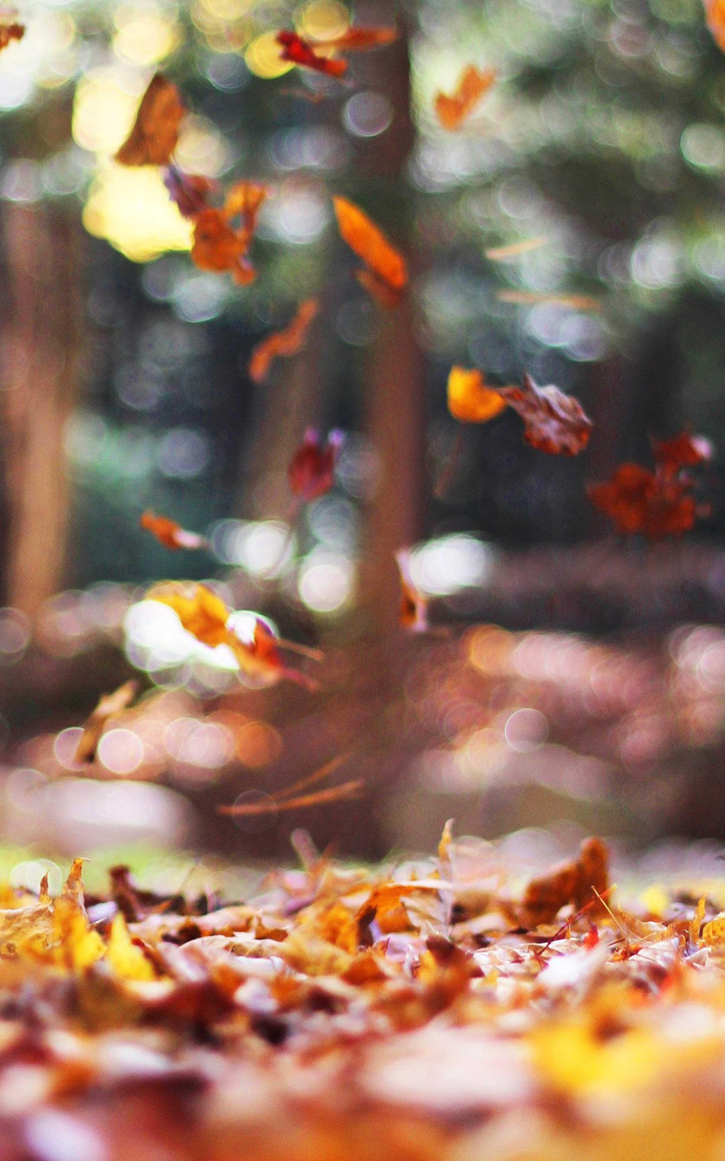 Autumn Wallpapers Best Autumn Wallpaper For Android Apk Download